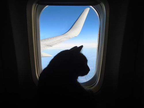 united airlines animal policy