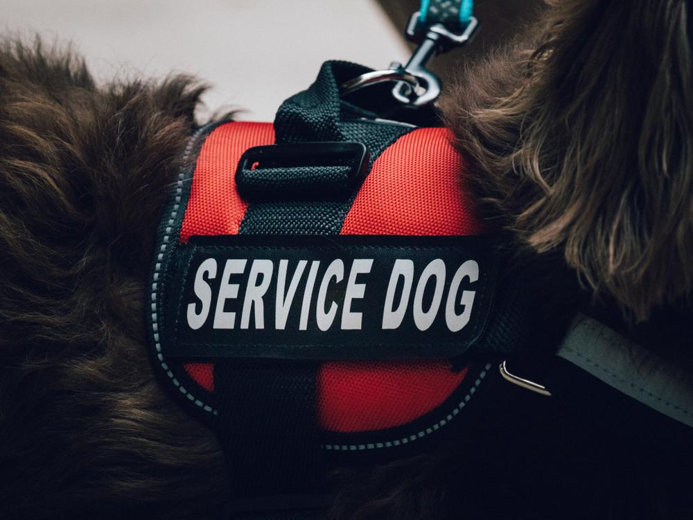 psychiatric service dog info