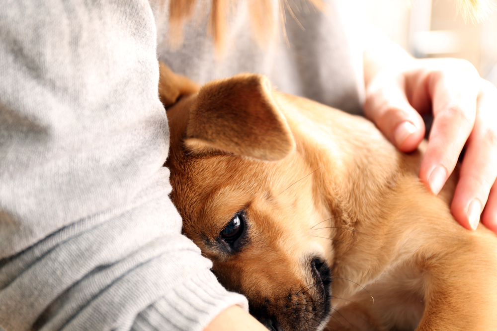 what does a psychiatric service dog do