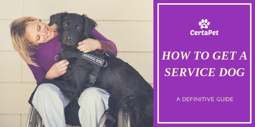 service dogs ptsd dog lying next to woman's wheelchair