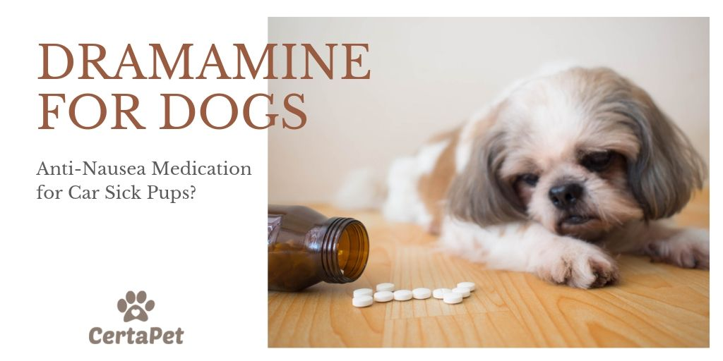 dramamine for dogs
