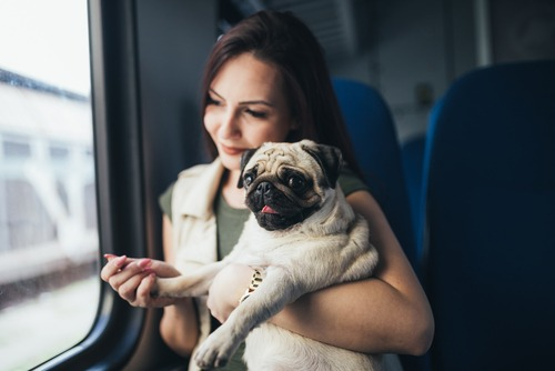 amtrak policy pets