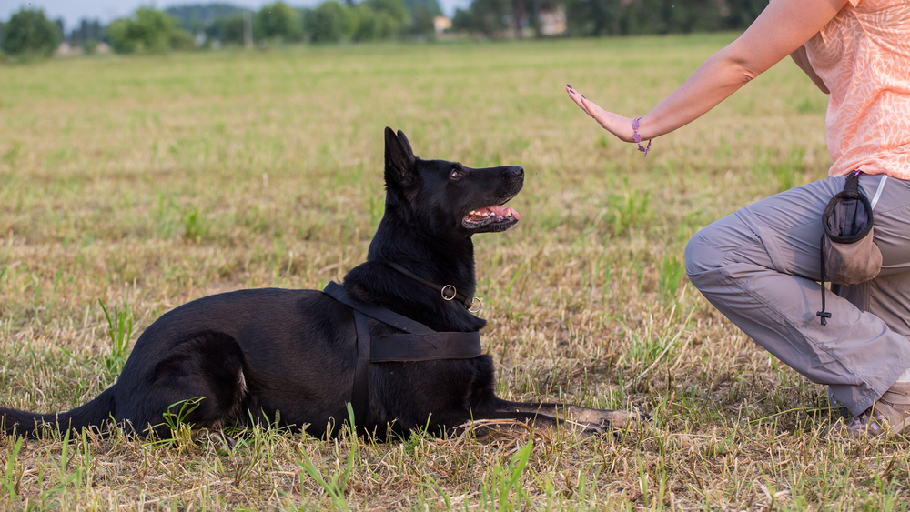 how to train a psychiatric service dog