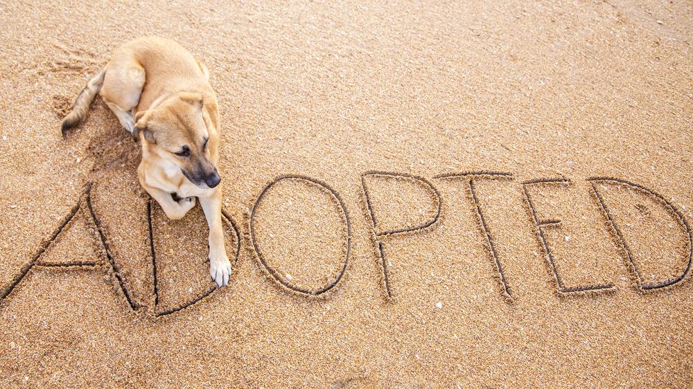 service dog used in psychiatry in ohio