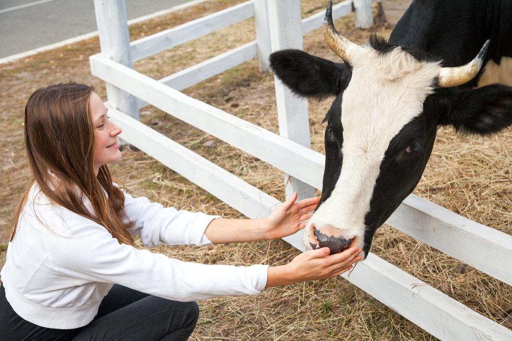 cow hugging benefits