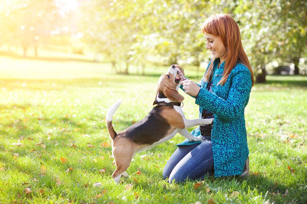 counterbalance service dog training