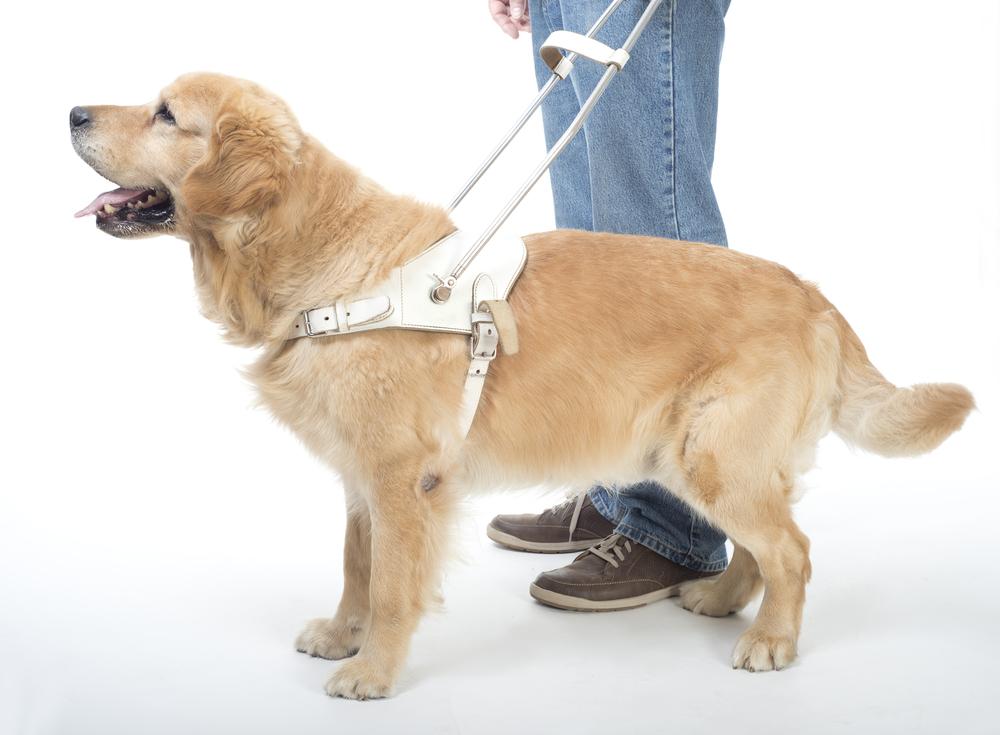 counterbalance service dog