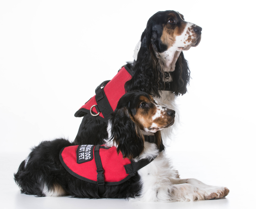 training service dog for ADHD