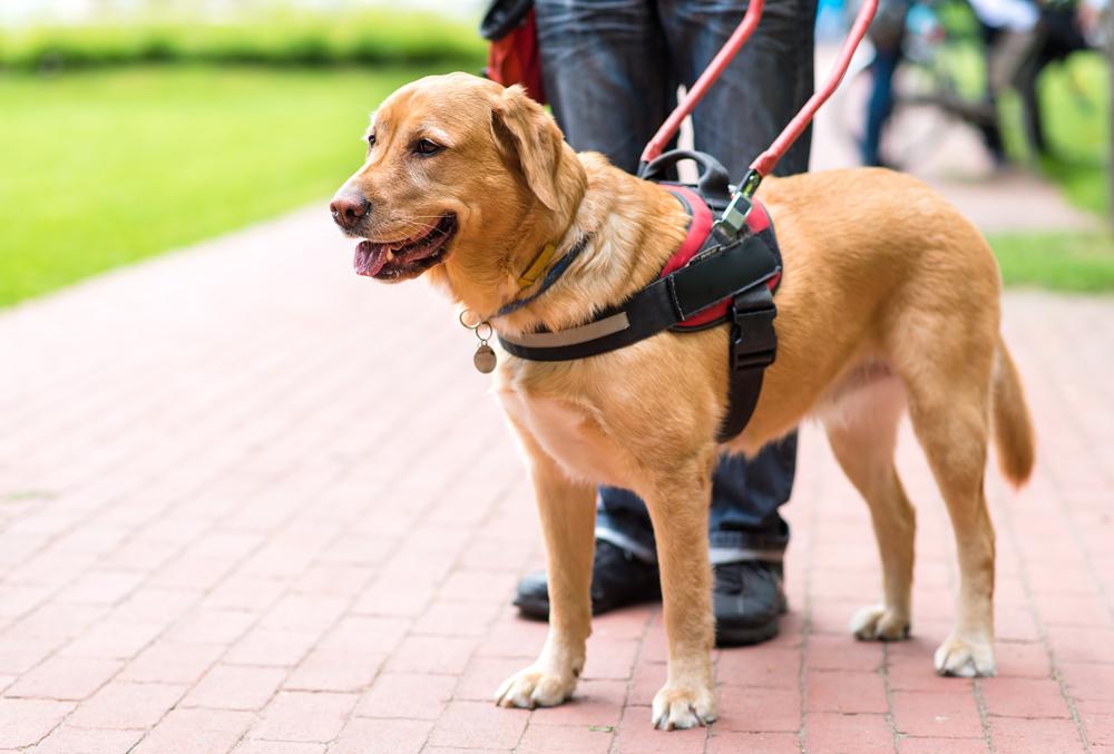 service dog counterbalance